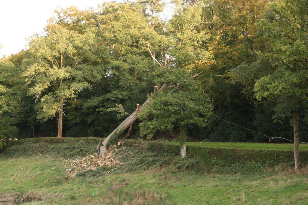 Abbatage d'un arbre dangereux