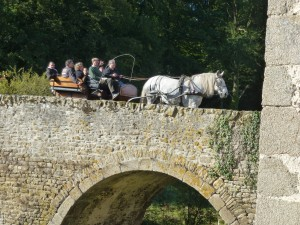 Une percheronne tire une charrette de 8 personnes!