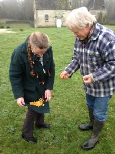 Cueillette de champignons d'hiver